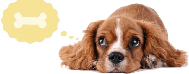 informationer-om-fiskeolie-til-hunden