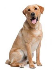 billede af den bedste hundefoder