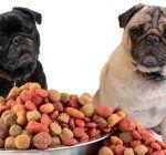 test af hundefoder