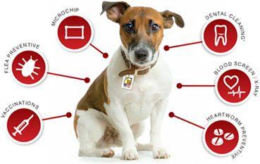 hundeforsikring forskellige priser