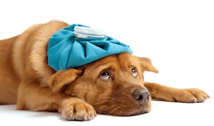 sammenligning af hundeforsikringer