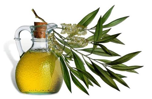 anvendelse af tea tree oil