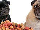 test af hundefoder mad
